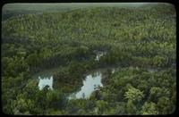Aerial View of a River Winding Through a Forest