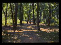 View of People Walking a Forest Path