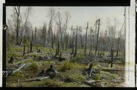 View of the Aftermath of Isle Royale Fire