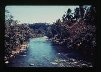 View of a River and Trees