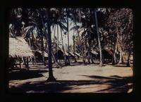 View of Huts and Palm Trees