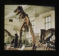 View of Dennis Cooper Touching a Tyranosaurus Rex Skeleton