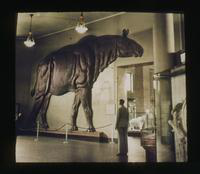 View of Dennis Cooper Looking at the Display of a Large Prehistoric Animal