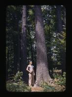 View of a Man in a Wooded Area