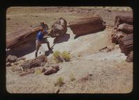 View of Dennis Cooper Near a Tree at the Petrified Forest