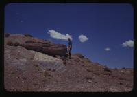 View of Dennis Cooper Standing next to a Petrified Tree