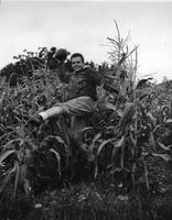 A football player frolics among the corn stalks.
