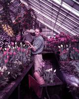 Belle Isle; Greenhouse. -Fred Koehrsen; Florist; Department of Parks & Recreation