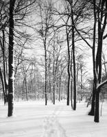 Belle Isle; Winter scenes. Snow Storm