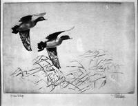 Birds; Etchings; Copies of Wild Life.