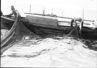 Fishing; Commercial; Saginaw Bay. Fisherman bring in nets. 11 negs.