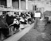 Strikes; Milk; Michigan. -Line Up for Milk at Mt. Clemens