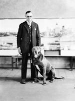 Animals; Dogs; Great Danes