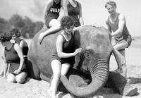 "Animals; Elephants; ""Sheba""; Belle Isle Zoo. With bathers on Belle Isle beach. Taking mud bath."