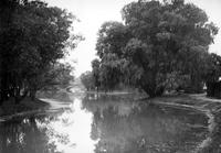 Belle Isle; Canals. Summer Scenes. Willlow trees.
