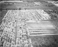 Apples; Orchards Near South Lyons, Michigan. - Airphoto