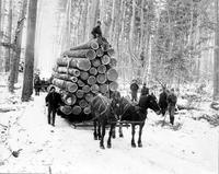 lumbering. Michigan. White Pine at Grayling. logger camp ( Archies Brown's Camp). horse drawn sleigh loaded w/ wood. 1930 filed. copies