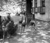 old Detroit; residences. iron birds & animals in yards. flamingoes at Arden Park & Woodward.